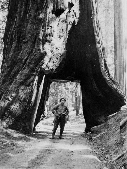 bill-zorach-walking-under-big-tree_20288_600x450